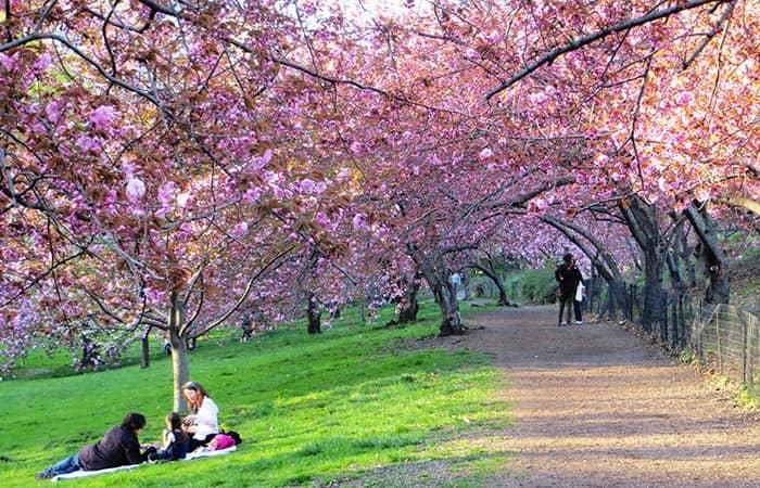 het-weer-in-new-york-lente