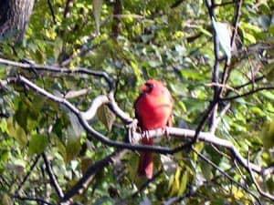 Vogelspotten new york