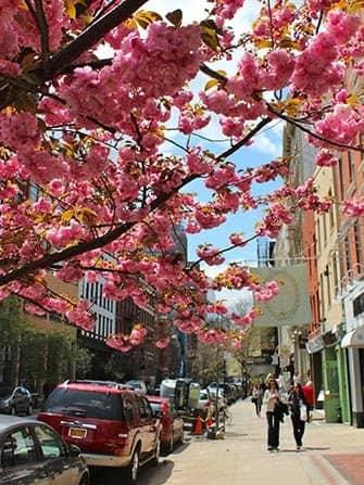 SoHo in New York - Bloemen