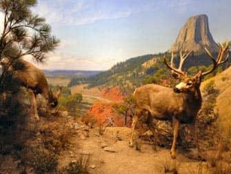 Museum van Natural History New York