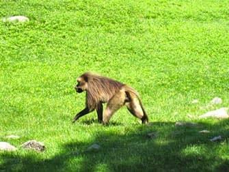 Aap Bronx Zoo NYC