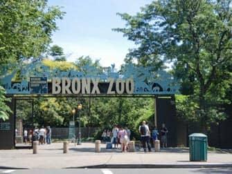 Bronx Zoo In New York Newyork Nl
