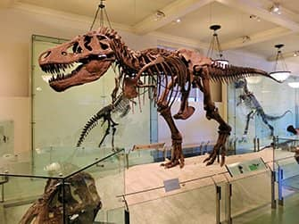 American Museum of Natural History in New York - Dinosaurus