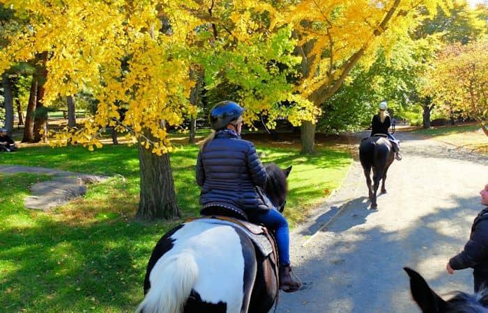 Paardrijden in Central Park - Paardrijden