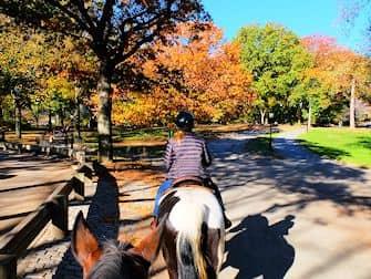 paardrijden-in-central-park-ruiterpad