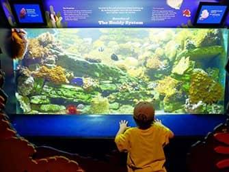 New York Aquarium - Vissen